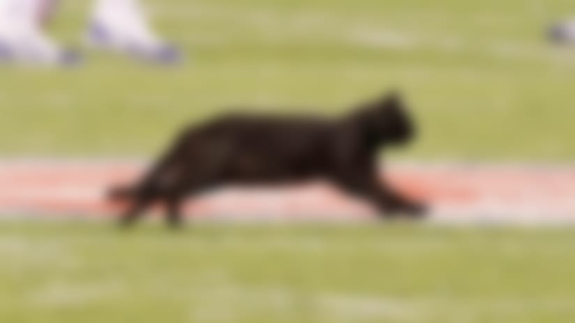 How did the Monday Night Football Cat get on the field?