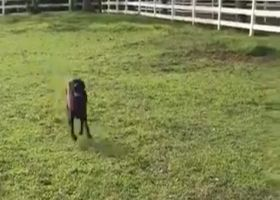 New Orleans Saints linebacker Alex Anzalone's dog Sammy crushes the 40-yard dash