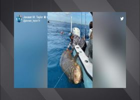 Must see: Jags OL catches 400-pound fish at sea